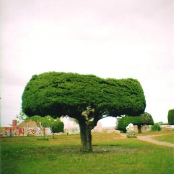 árbol truncado